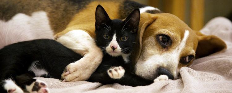 猫绝育的坏处 宠物绝育究竟是好是坏有必要绝育吗