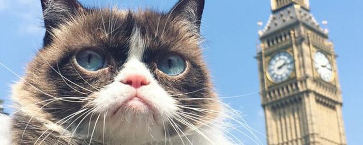 猫为什么要绝育手术 猫绝育的好处