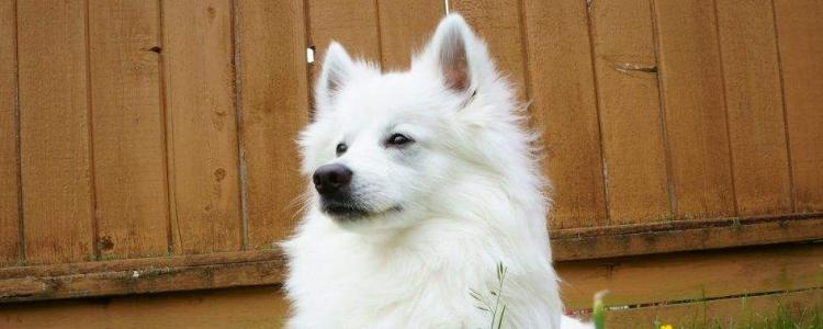 还没有发情的母狗怎么样让它发情 及时判断狗狗的情况