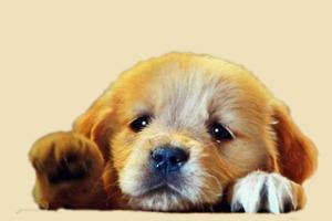 狗狗得了犬瘟能活多久