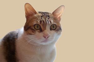 公猫尿频每次尿几滴
