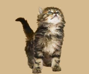 打过疫苗的猫抓人后需要打针吗