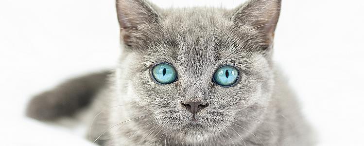 母猫为什么不发情 猫咪身体可能有问题哦!