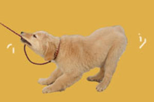 狗狗的寄生虫会传染人吗