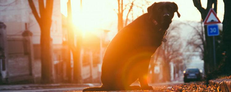 狗会得老年痴呆吗 患老年痴呆有哪些症状