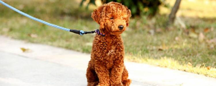 狗狗吃营养膏的好处 主人可以给幼犬准备一支营养膏