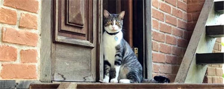 公猫做完绝育多久恢复 绝育后有哪些注意事项