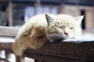 老年猫咪怎么护理 老年猫咪护理方法